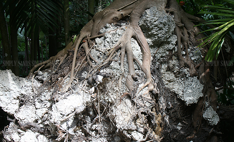 root-tree