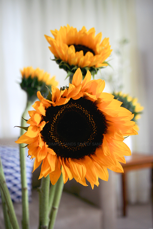 sunflower_1_simplysands_wordpress